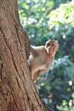 Jonge aap die op de boom beklimmen stock foto's