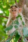 Jonge aap in diepe gedachten stock afbeelding