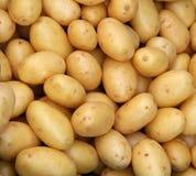 Jonge aardappels Royalty-vrije Stock Foto