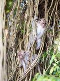 2 jonge apen die de wereld onderzoeken Stock Foto