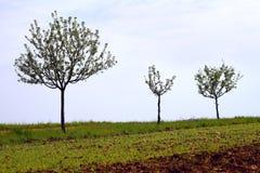Jonge appelbomen Stock Afbeelding