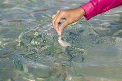 Jonge Aziatische meisjes voedende vissen Stock Afbeelding
