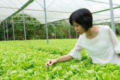 Jonge Aziatische vrouw in organisch plantaardig landbouwbedrijf Stock Foto's