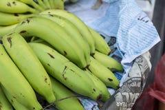 Jonge banaan Royalty-vrije Stock Afbeelding