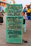Jonge Birmaanse mens met gelukkige uilen Royalty-vrije Stock Foto