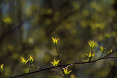 Jonge bladeren in de lente Stock Foto's