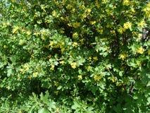 Jonge bladeren en gele bloemenachtergrond Royalty-vrije Stock Foto's