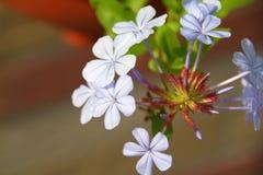 Jonge bloemen in een de lentetuin Royalty-vrije Stock Foto's
