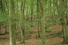 Jonge bomen Royalty-vrije Stock Afbeeldingen