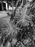 Jonge bomen Stock Afbeeldingen