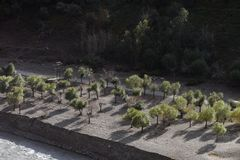 Jonge bomen met ronde kronen op rivierterras Stock Foto