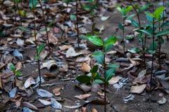 Jonge boomachtergrond Royalty-vrije Stock Afbeelding