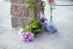 Jonge boompjes van bloemen Royalty-vrije Stock Afbeeldingen