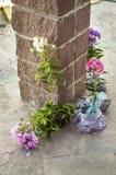 Jonge boompjes van bloemen Stock Fotografie