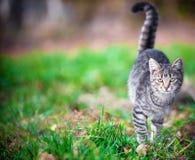 Jonge Cat Walking On Grass stock foto's