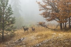 Jonge deers in vertroebelend bos Royalty-vrije Stock Afbeelding