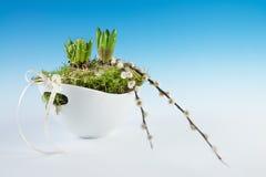 Jonge die hyacintbollen in een witte vaas, exemplaarruimte worden geplant stock fotografie