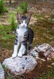 Jonge die kat met ogen brede open wordt bevonden Stock Afbeelding