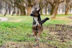 Jonge energieke helft-ras hond Harmonische verhouding met de hond: opleiding en onderwijs royalty-vrije stock foto