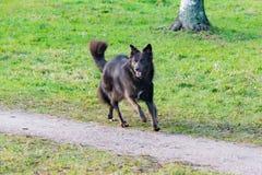 Jonge energieke helft-ras hond Harmonische verhouding met de hond: opleiding en onderwijs stock foto's