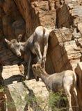 Jonge geitjes bij Spel Royalty-vrije Stock Foto's