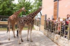 Jonge geitjes in de dierentuin Royalty-vrije Stock Fotografie