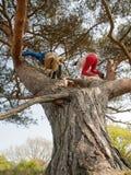Jonge geitjes die in een boom beklimmen stock afbeeldingen