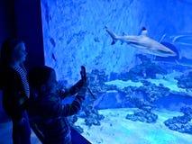 Jonge geitjes die groot aquarium met haaien en exotische vissen bewonderen stock afbeeldingen
