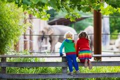 Jonge geitjes die op olifant letten bij de dierentuin Stock Foto