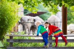 Jonge geitjes die op olifant letten bij de dierentuin Royalty-vrije Stock Foto's