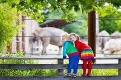 Jonge geitjes die op olifant letten bij de dierentuin Stock Fotografie