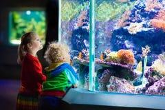 Jonge geitjes die op vissen in tropisch aquarium letten royalty-vrije stock afbeelding