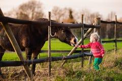 Jonge geitjes die paard op een landbouwbedrijf voeden Stock Afbeelding