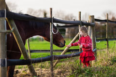Jonge geitjes die paard op een landbouwbedrijf voeden Stock Afbeeldingen