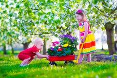 Jonge geitjes in een tuin met bloeiende kersenbomen Stock Fotografie