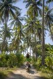 Jonge gelukkige toeristenvrouw met motor van de hoeden de berijdende autoped in tropische paradijswildernis met blauwe hemel en p stock fotografie