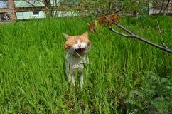Jonge gemberkat in groen gras stock foto's