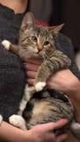 Jonge gestreepte katkat stock foto's