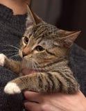 Jonge gestreepte katkat stock afbeeldingen
