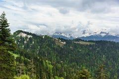 Jonge greens van loofbomen en de donkere naalden van sparren op de hellingen van de bergen van de Kaukasus Snow-capped pieken Stock Fotografie