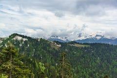 Jonge greens van loofbomen en de donkere naalden van sparren op de sneeuwhellingen van de bergen van de Kaukasus Stock Foto's