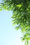 Jonge groene bladeren stock fotografie