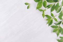 Jonge groene bladeren als decoratieve grens op witte houten raad royalty-vrije stock foto