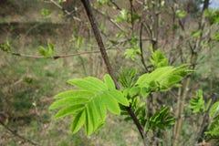 Jonge groene boombladeren Stock Foto's