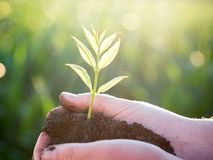 Jonge groene installatie in de handen Het nieuwe leven Het concept van de ecologie royalty-vrije stock afbeeldingen
