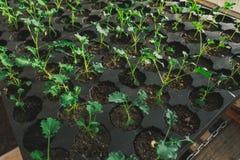 Jonge groene spruit in de grond in dozen Stock Foto
