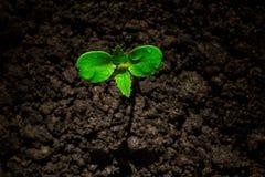 Jonge groene spruit met waterdaling het groeien van grond gedeeltelijk in schaduw en gedeeltelijk in licht, milieuconcept royalty-vrije stock afbeeldingen
