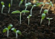 Jonge groene spruiten stock foto