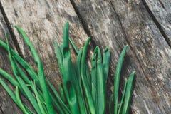 Jonge groene ui op een oude grijze houten oppervlakte royalty-vrije stock foto's