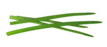 Jonge groene uien Stock Foto